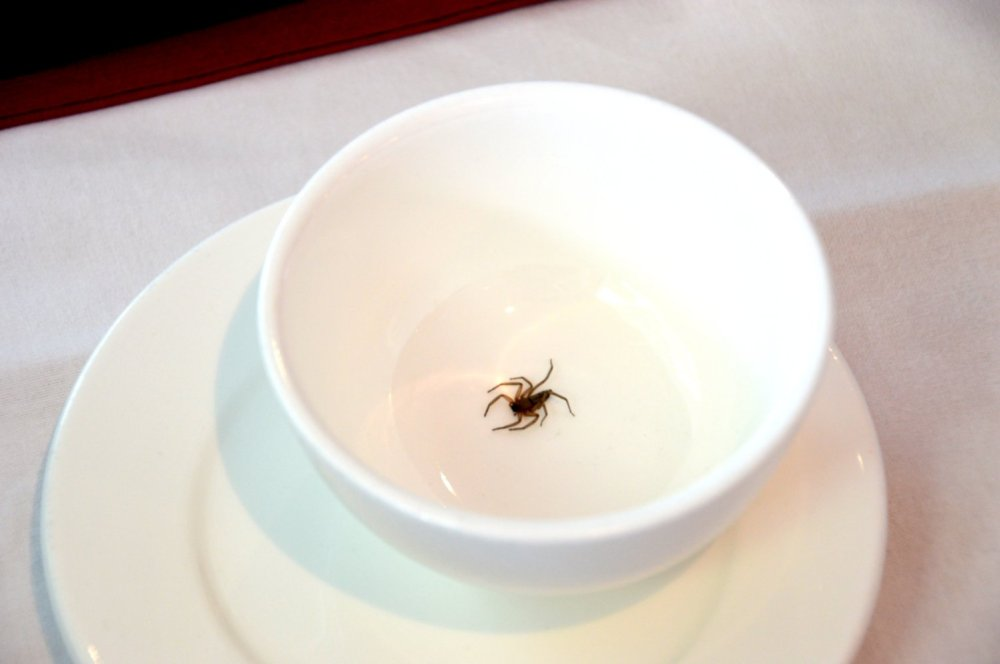 Spider in a bowl